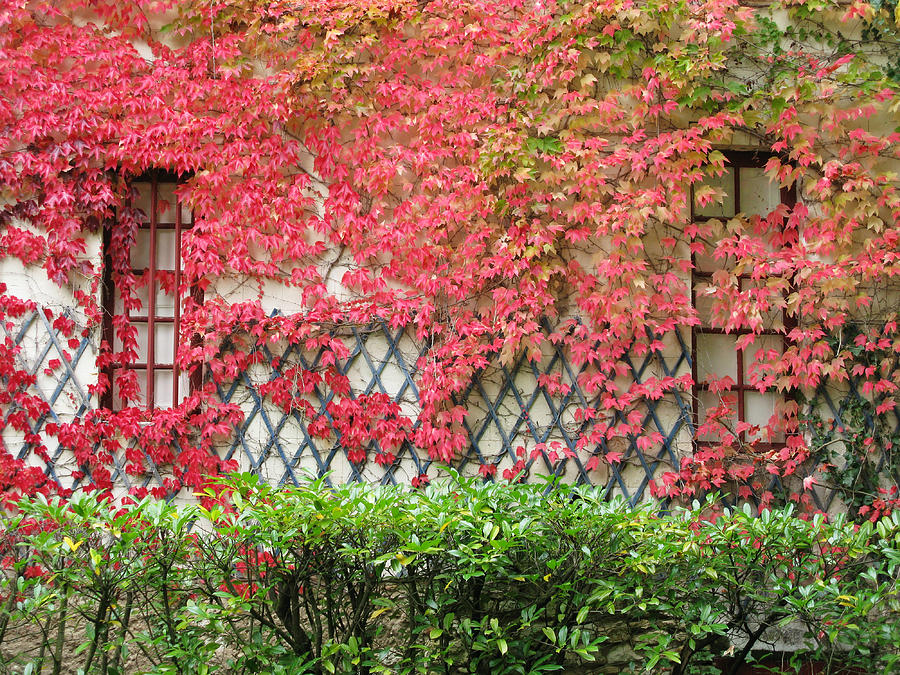 Fall Leaves Photograph - Chateau Chenonceau Vines On Wall Image One by Randi Kuhne