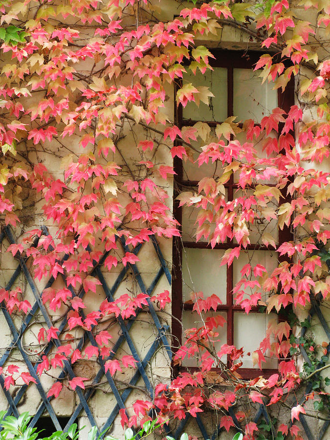 Fall Leaves Photograph - Chateau Chenonceau Vines on Wall Image Two by Randi Kuhne