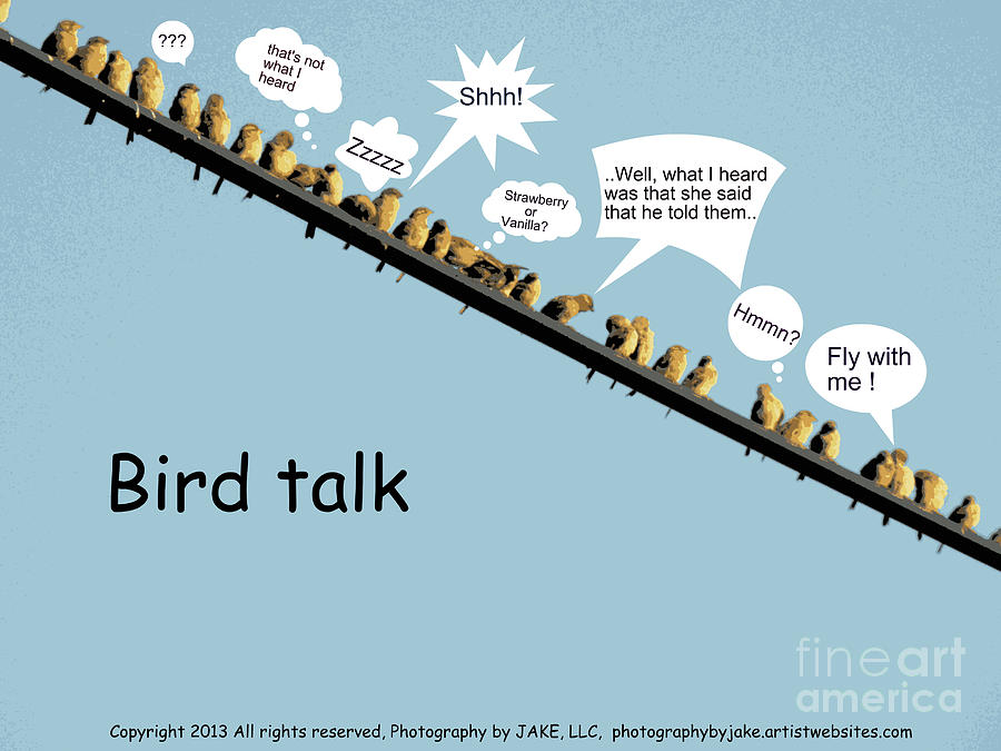 Bird Poster Photograph - Chatter by Joe Jake Pratt