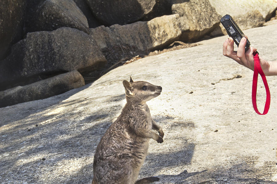 Rock Wallaby Photograph - Cheeese by Debbie Cundy