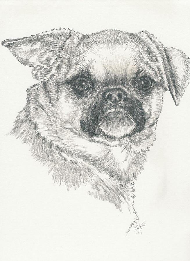 Designer Dog Drawing - Cheeky Cheeks by Barbara Keith