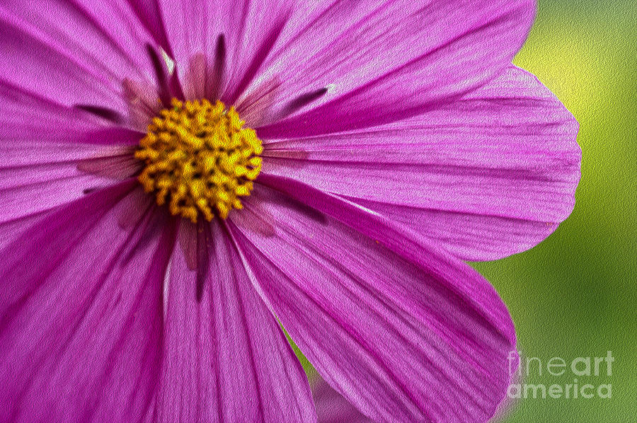 Flower Photograph - Cheerful by Nur Roy