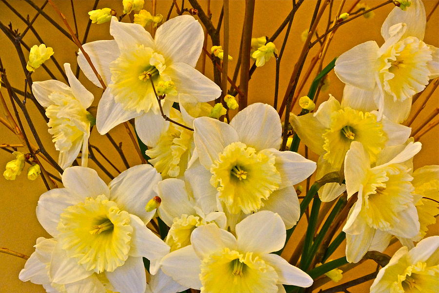 Daffodils And Forsythia Bouquet Photograph - Cheerful Warmth Of Spring by Byron Varvarigos