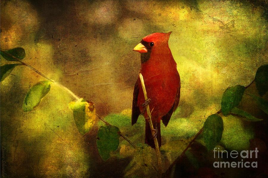 Cheery Red Cardinal Digital Art