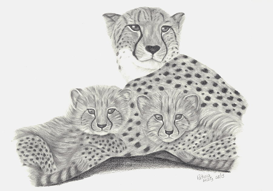 Cheetah Drawing - Cheetah And Her Cubs by Patricia Hiltz