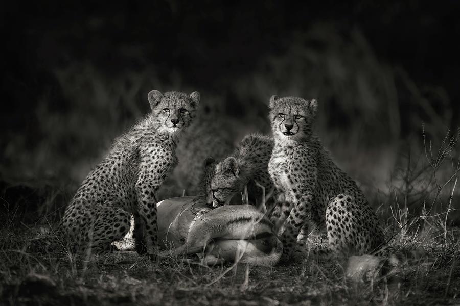Africa Photograph - Cheetah Cubs by Mario Moreno