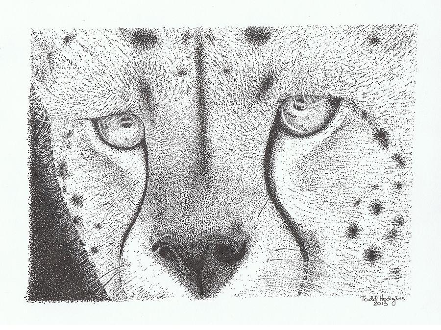 Cheetah Drawing - Cheetah Face by Todd Hodgins