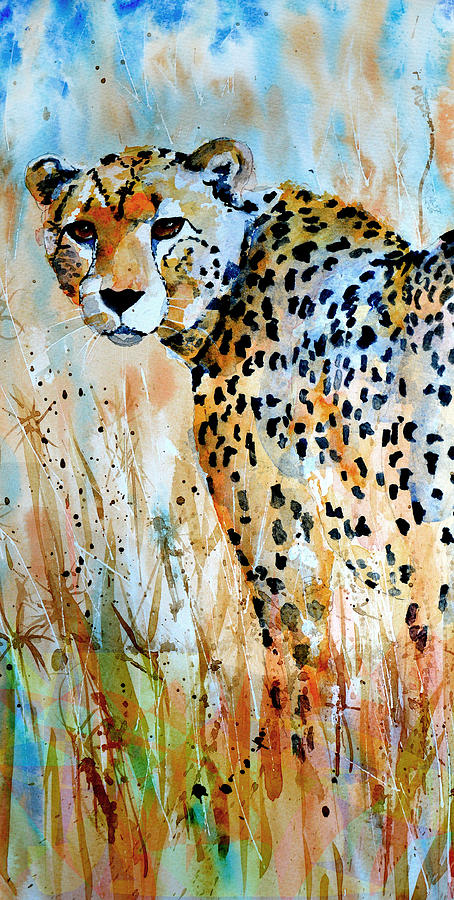 cheetah by Steven Ponsford