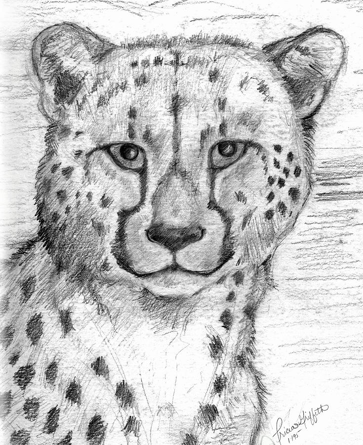Cheetah Drawing - Cheetah by Tricia Griffith