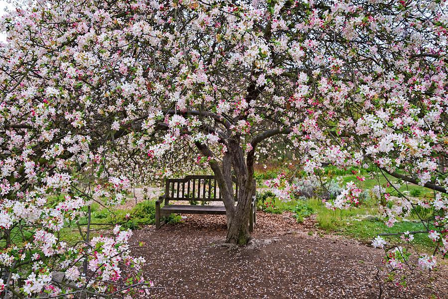 Bench Photograph - Cherries Jubilee by Lynn Bauer