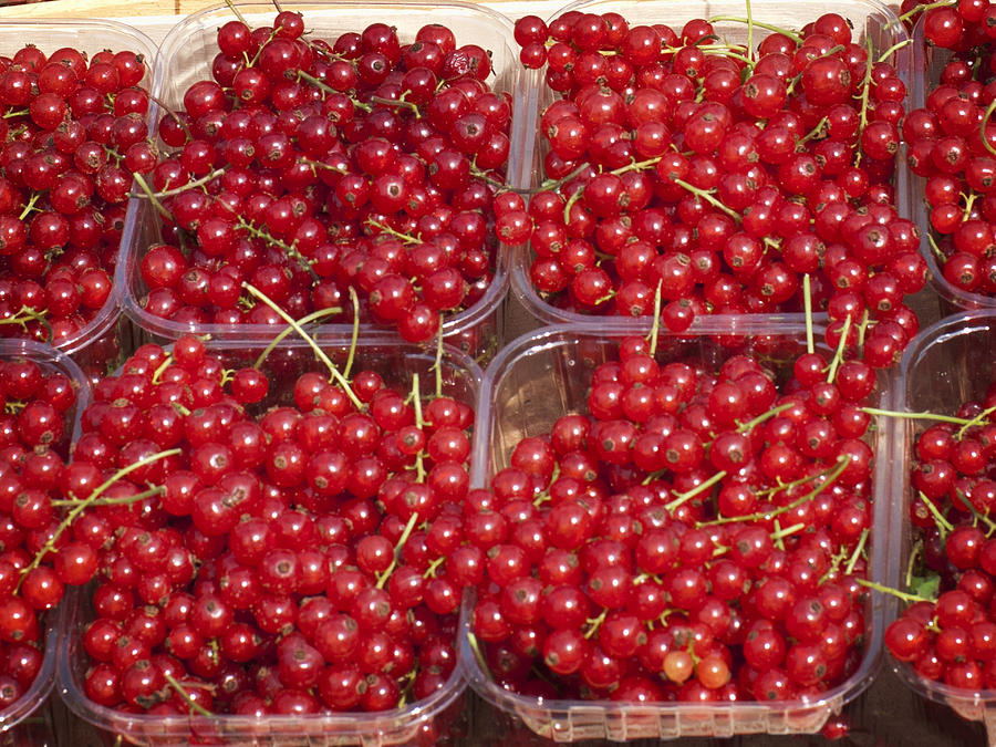 Currants Photograph - Currants by Phyllis Taylor