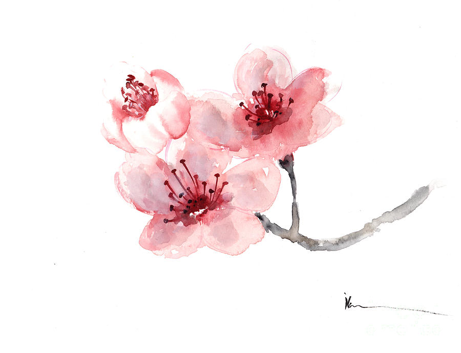 Cherry blossom flower watercolor art print painting painting by sakura painting cherry blossom flower watercolor art print painting by joanna szmerdt mightylinksfo