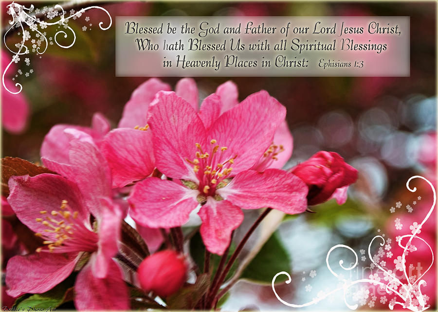 flower blossom wallpaper scripture - photo #5