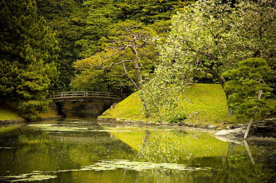 green photograph cherry blossom japanese garden by sebastian musial