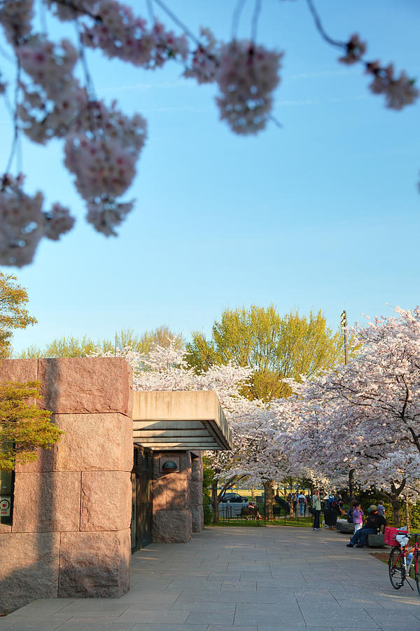 Architectural Photograph - Cherry Blossoms 2013 - 021 by Metro DC Photography