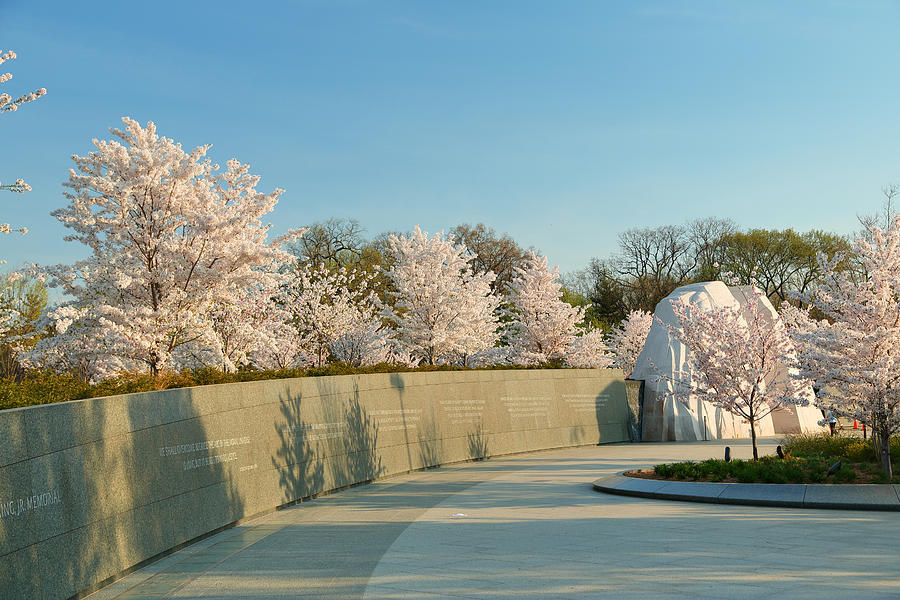Architectural Photograph - Cherry Blossoms 2013 - 022 by Metro DC Photography