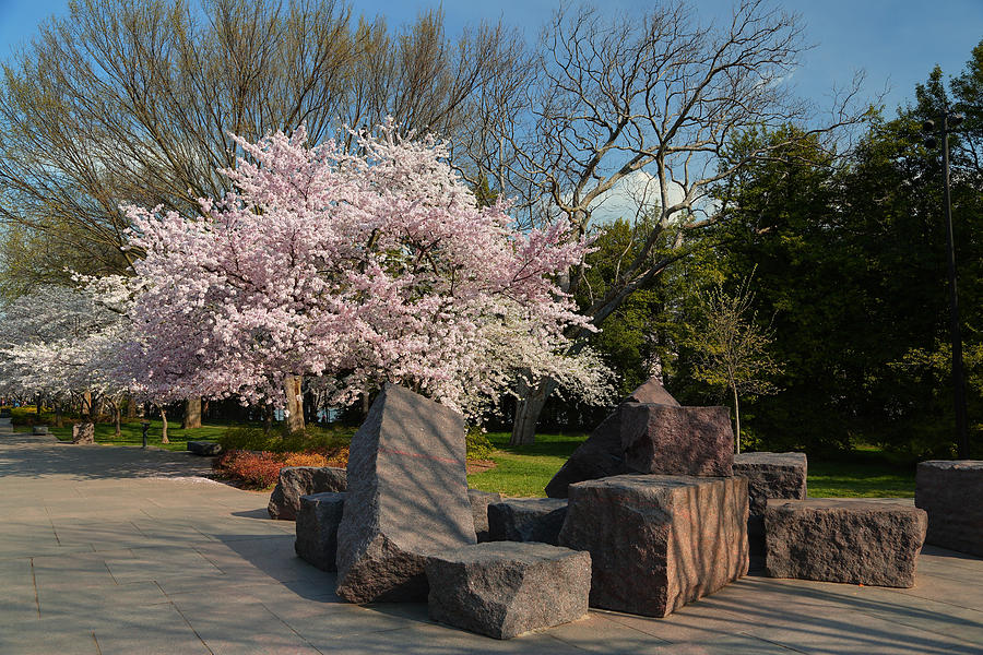 Architectural Photograph - Cherry Blossoms 2013 - 058 by Metro DC Photography