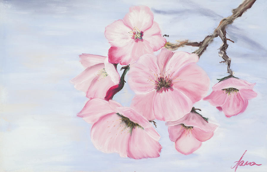 Cherry Blossoms Pastel - Cherry Blossoms by Dana Strotheide
