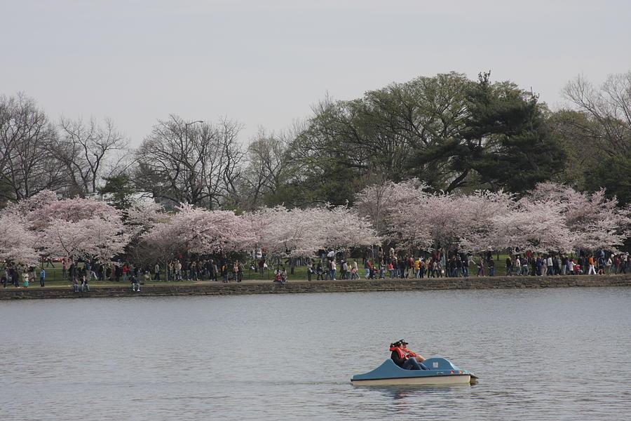 Cherry Photograph - Cherry Blossoms - Washington Dc - 011314 by DC Photographer