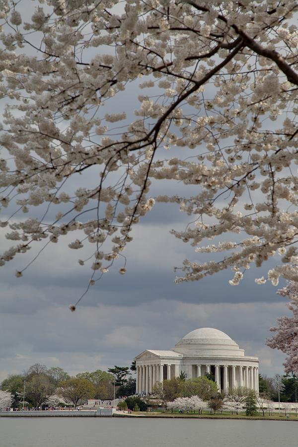 America Photograph - Cherry Blossoms With Jefferson Memorial - Washington Dc - 011313 by DC Photographer