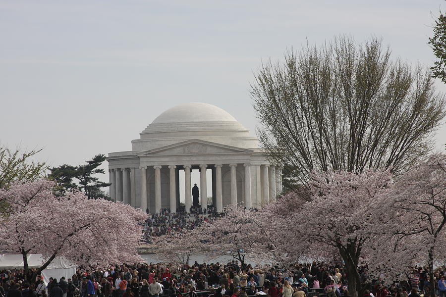 Cherry Photograph - Cherry Blossoms With Jefferson Memorial - Washington Dc - 01132 by DC Photographer