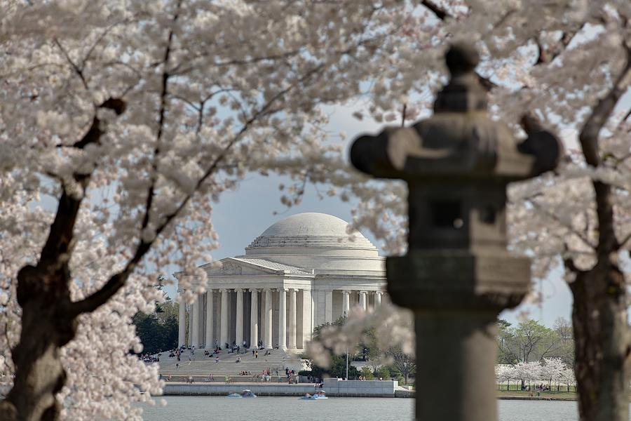 America Photograph - Cherry Blossoms With Jefferson Memorial - Washington Dc - 011325 by DC Photographer