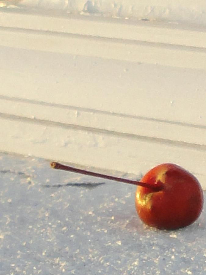 Artsy Photograph - Cherry In The Spotlight by Guy Ricketts