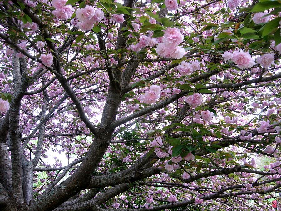 Cherry Tree Painting - Cherry Tree 3 by Mimi Saint DAgneaux