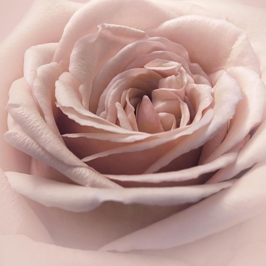 Floral Photograph - Cherry Vanilla Sundae by Darlene Kwiatkowski