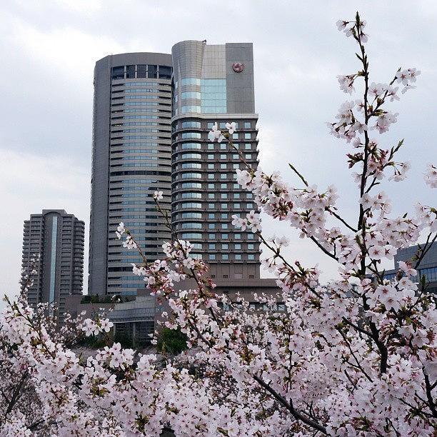 Cherryblossom Sakura Photograph by My Senx