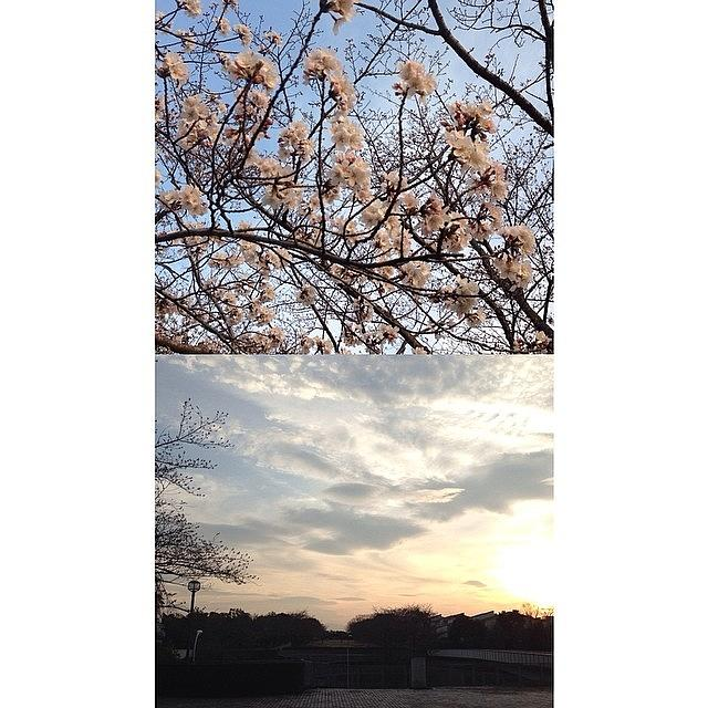 Cherryblossoms #frontback @frontbackapp Photograph by Tokyo Sanpopo