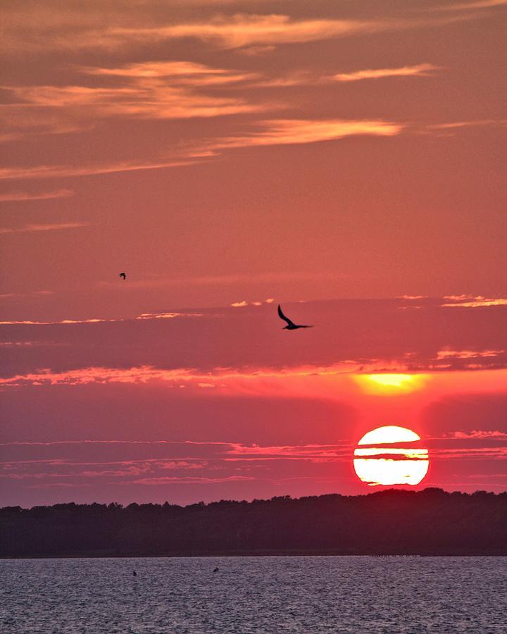 Chesapeake Photograph - Chesapeake Sunset 1 by John Feiser
