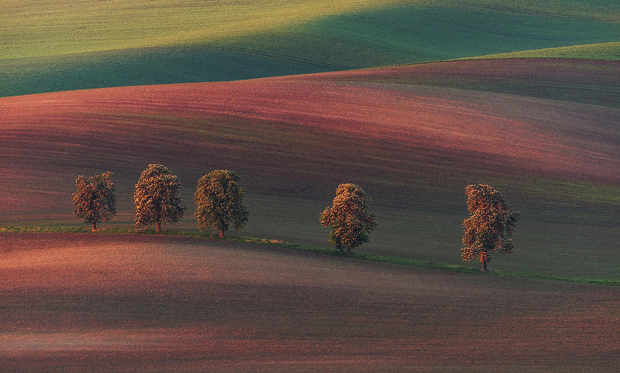 Red Photograph - Chestnut Avenue by Ales Krivec