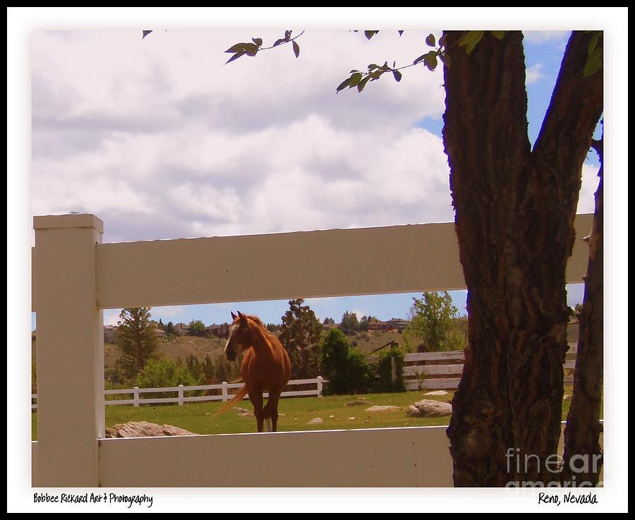 Horse Photograph - Chestnut Beauty by Bobbee Rickard