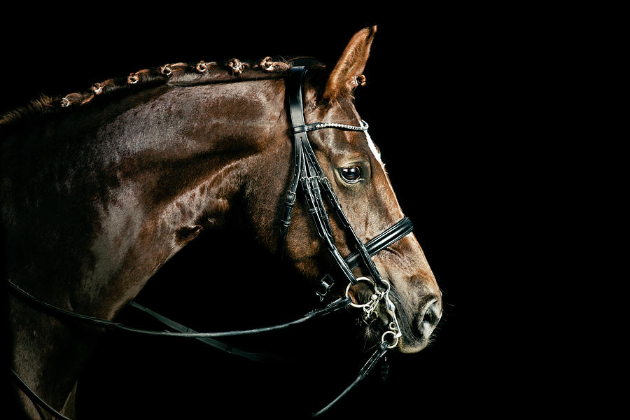 Chestnut Dressage Horse Groomed For A Photograph by Anja Hild