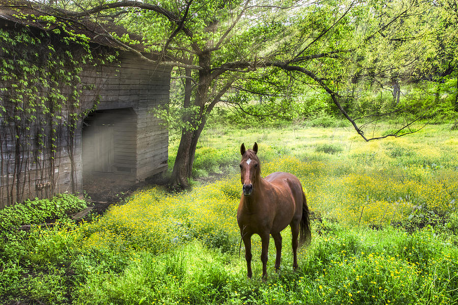 Appalachia Photograph - Chestnut Horse In A Sunny Meadow by Debra and Dave Vanderlaan