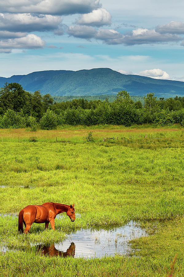 Chestnut Horse In Meadow Photograph by Kayla Stevenson Photography
