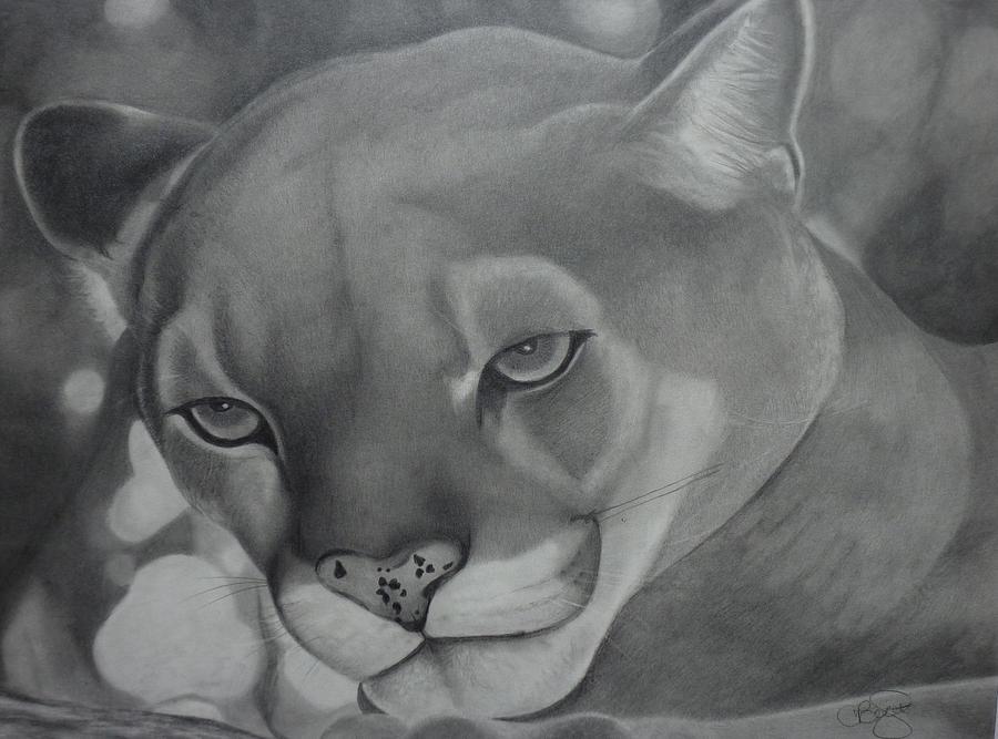 Cougar Drawing - Cheyenne by Christine  Blodgett