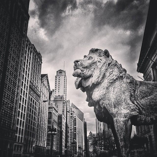 America Photograph - Art Institute of Chicago Lion Picture by Paul Velgos