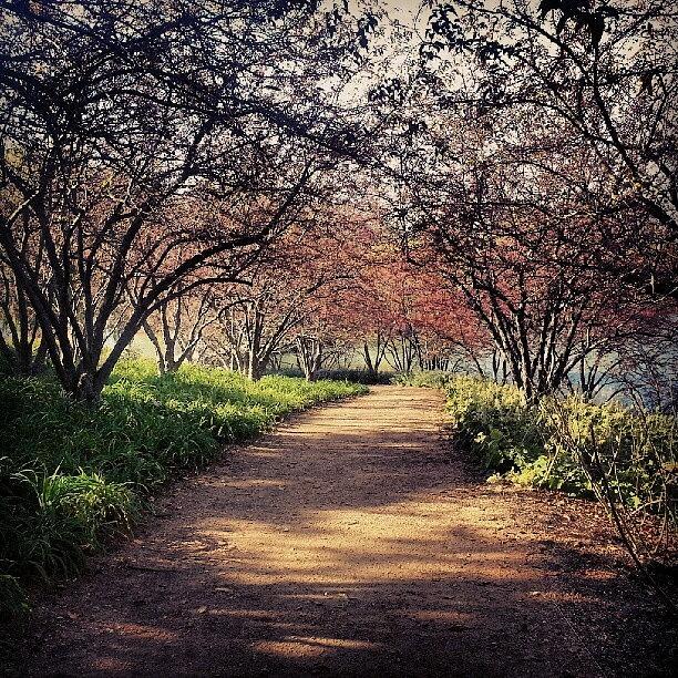 Trees Photograph - Chicago Botanic Gardens by Jill Tuinier