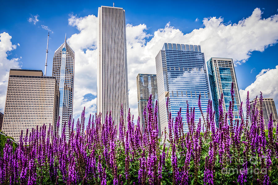 Chicago Downtown Buildings And Spring Flowers Photograph By Paul Velgos