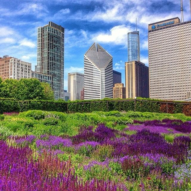 Beautiful Photograph - Chicago Skyline At Lurie Garden by Paul Velgos