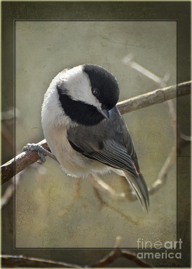 Nature Photograph - Chickadee Early Bird I by Debbie Portwood