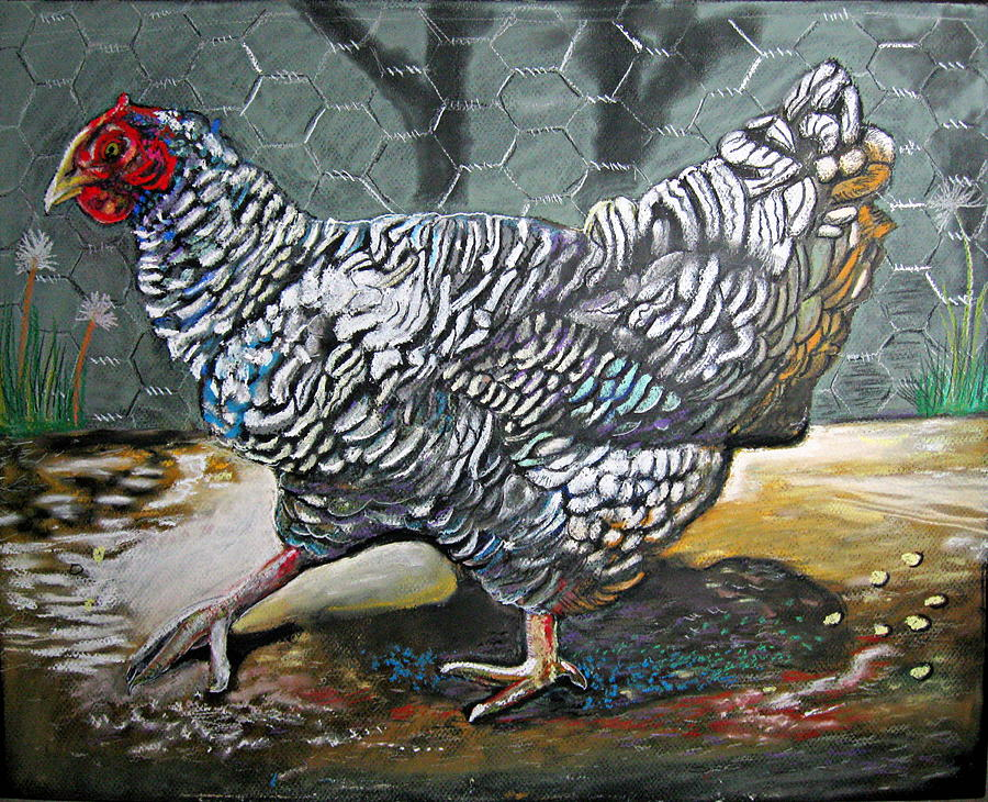 Dominique Chicken Drawing - Chicken In The Pen by Mike Benton