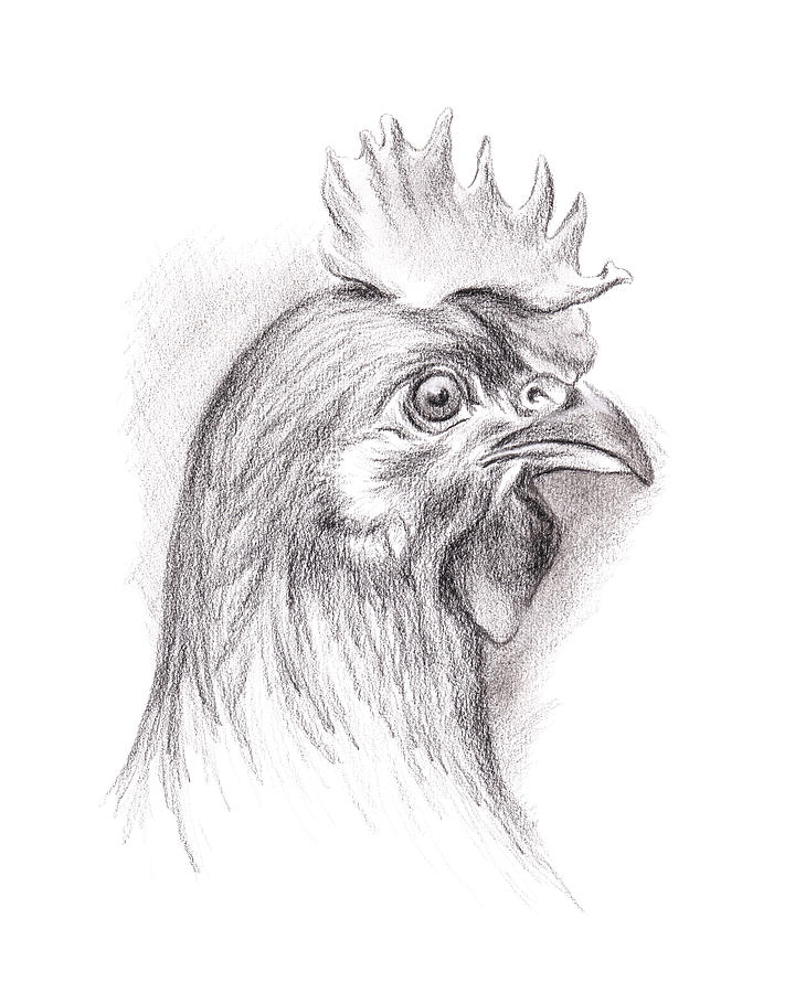 Chicken Drawing - Chicken Portrait In Charcoal by MM Anderson