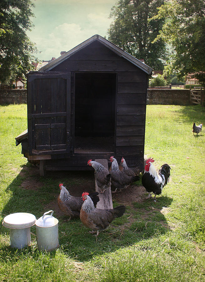 Chickens Photograph - Chicken Run by Stephen Norris