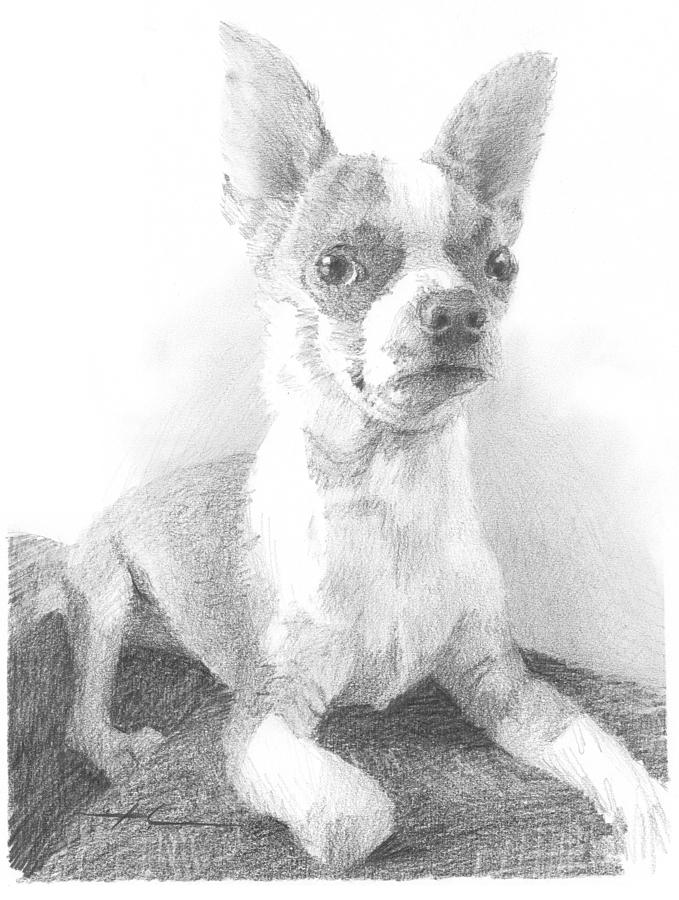 Chihuahua Dog Pencil Portrait Drawing by Mike Theuer