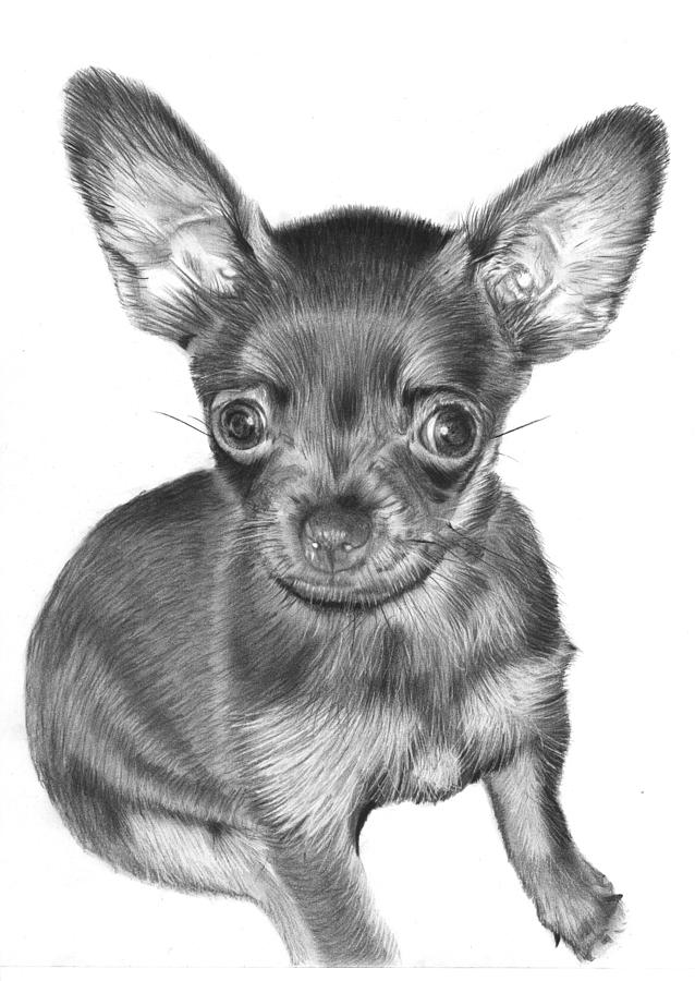 It's just a graphic of Canny Drawing Of Chihuahua