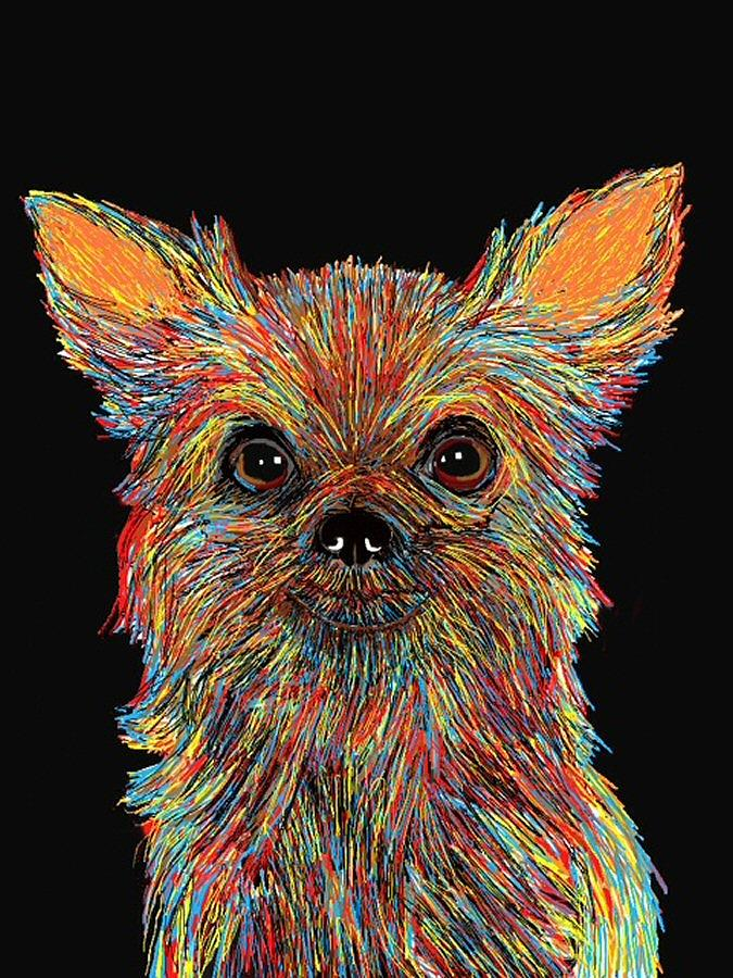 Chihuahua Drawing - Chihuahua - Rose by Bert Hornbeck