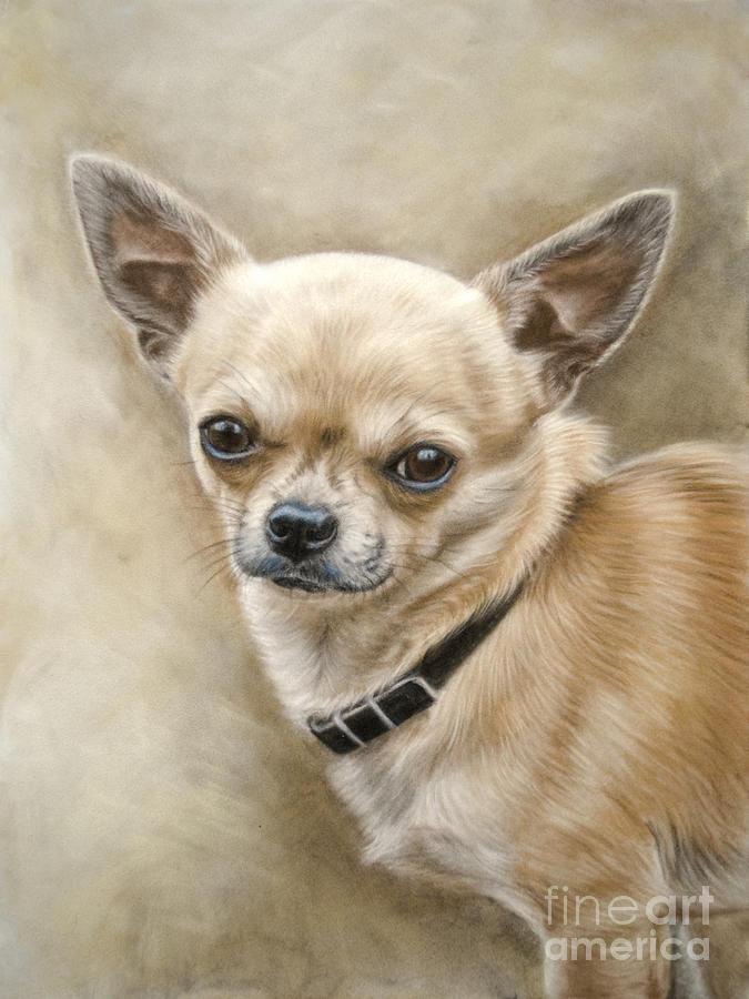 Chihuahua Pastel - Chihuahua by Tobiasz Stefaniak